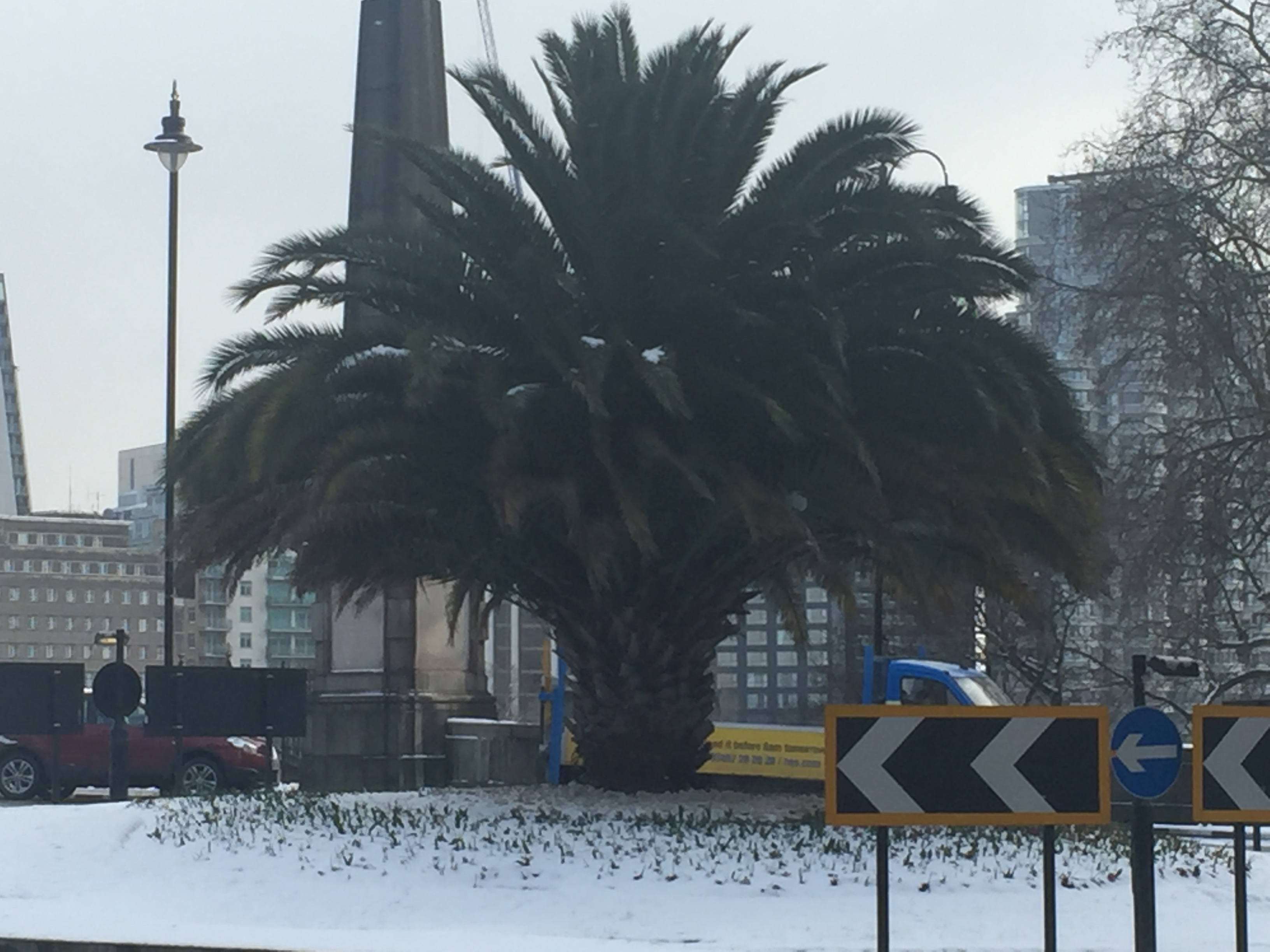 Palm Trees Thrive in Central London Snow Storm
